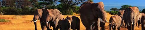 Elephants are Friends