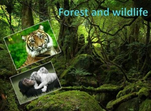 Indian Forest Act